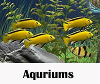 Aqurium